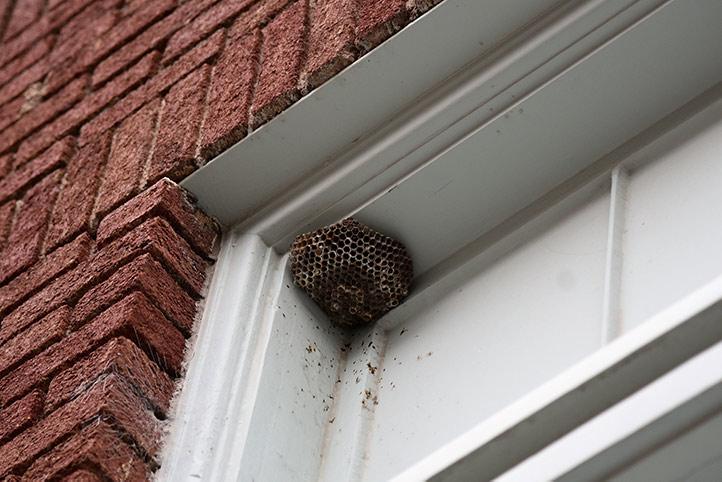 We provide a wasp nest removal service for domestic and commercial properties in Hampton.